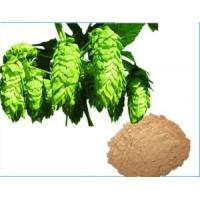 China Hops Extract,Humulus Lupulus L. Extract,Light Yellow-Brown Powder,Herbal Extract/Plant Extract on sale