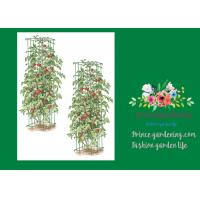 "Heavy Duty Metal Square Tomato Cages With 8"" Square Openings Manufactures"