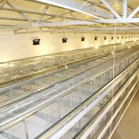 China Chickens A Type Layer Cages , High Efficiency Poultry Processing Equipment on sale