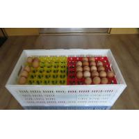 China High quality plastic egg tray for incubator or transferring on sale