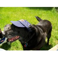 Quality Cool Fashion Pet Hat for sale