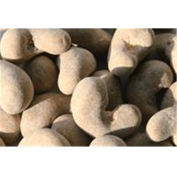 China Lucid Ganoderma Cashew Nuts Healthy SnackSafe Raw Ingredient Free From Frying on sale