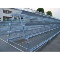 China Hot selling Africa chicken cage for sale automatic chicken layer cage for sale on sale