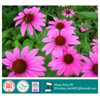 GMP 100% Natural Echinacea Extract Manufactures