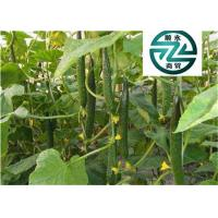 Rich In Protein Cucumber Family Plants Clearing Away Heat And Toxic Material Manufactures