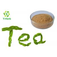 China Green Tea Leaf Extract Herbal Extract Powder 98% Polyphenol 70% EGCG Catechin Camellia Sinensis Powder on sale