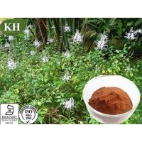China Orthosiphon Stamineus Extract on sale
