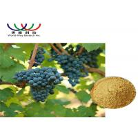 China Pure Grape Skin Extract Vitis Vinifera Powder , Resveratrol Plus Red Wine Extract on sale