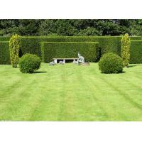 Monolif / Curly PPE Golf Court Landscaping Artificial Grass Synthetic Lawn Manufactures