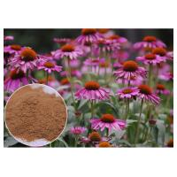 Purple Coneflower Antibacterial Plant Extracts With Chicory Acid Brown Powder Manufactures
