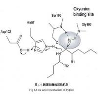 9002-07-7 , Recombinant Trypsin / Amino Acid Sequence Is Identical To Porcine Pancreas-Deri Manufactures