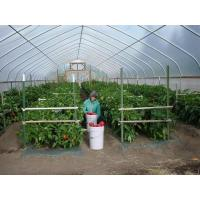 Easy Install Small Tunnel Greenhouse , Tunnel House Greenhouse Span Width 6 / 8 / 10m Manufactures