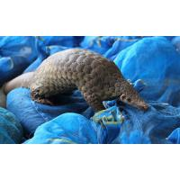 public art large pangolin sculptures statues of fiberglass nature painting as decoration statue in garden theme park Manufactures