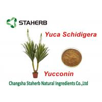 Yucca Schidigera Extract Natural Feed Additives Yocoin Yucca Powder Manufactures