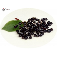 GMP Anti Aging Water Soluble Pure Elderberry Extract Manufactures