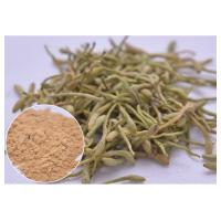 China treat cold, fever and infection Chlorogenic acid 5%, 25% Lonicera japonica Extract Honeysuckle flower powder on sale