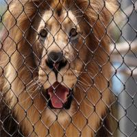 Buy cheap Stainless Steel 304 Anti biting Zoo Wire Mesh For Animals-Lion Protective from wholesalers