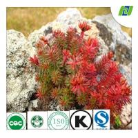 China rhodiola rose extract wtih Rosavins 3% and Salidrosides 3% by HPLC wholesale