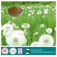 China GMP 100% Natural Dandelion Extract on sale