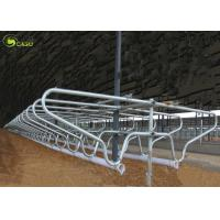 Cattle Farm Equipment Adjustable Dairy Cattle Free Pen Stall Corrals Cow Barns Manufactures