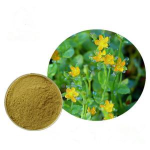 Free sample supply Hypericin Perforatum Extract, Hypericum Extract Hypericin for Depression Manufactures