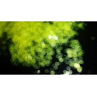 """1/12"""" Light Neon Yellow Glitter Powder for nail art 2mm 0.08 hinny color shinny confetti sequin decoration Manufactures"""