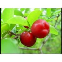 Acerola Cherry Extract / Natural Vc Manufactures