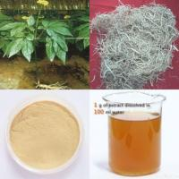 Panax Ginseng Root Extract Manufactures