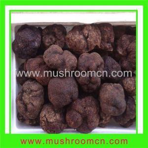 China Fresh Truffle on sale