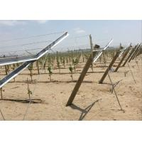 Hot Dipped Galvanized Metal Grape Vine Stakes Enables Sunlight Reach Make Grape Grow Manufactures