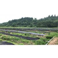Weed killer Agriculture Non Woven Fabric Plant / Ground Cover Breathable Anti Frost Manufactures