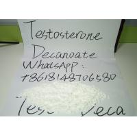 China Testosterone Decanoate Powder , Test Deca Anabolic Steroid Hormones on sale