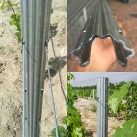 Substitute Of Cement Posts And Wooden Posts 2.4m 2.5m Hot Dipped Galvanized Steel Vineyard Trellis Grape Posts Manufactures
