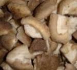 Frozen Oyster Mushroom/ Pleurotes/ Shiitake Mushroom Manufactures