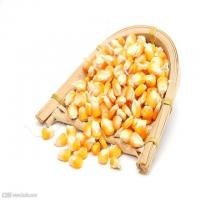 Buy cheap Corn seed counting and filling machine high accuracy replace manual machine from wholesalers