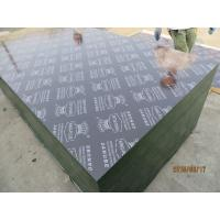 KINGPLUS FILM FACED PLYWOOD,Concrete construction Shuttering film faced Marine Plywood Formwork Plywood Manufactures