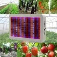 High Tech Dimmable LED Grow Lights Indoor With 50~60Hz Frequency Manufactures