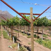 Anti Corrosive Vineyard Trellis Construction Metal Line Vineyard Posts 2.5mm Thick Manufactures