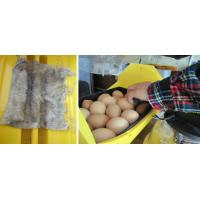 China FRD-H(New full automatic commercial incubators for hatching eggs) on sale