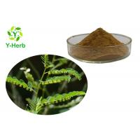 Pure Chanca Piedra Powder 10:1, 50:1, 100:1 Phyllanthus Urinaria Extract Manufactures