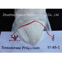 Anabolic Strongest Testosterone Steroid Propionate CAS 57-85-2 for Bodybuilding Manufactures