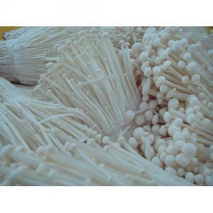 China Fresh Enoki Mushroom on sale
