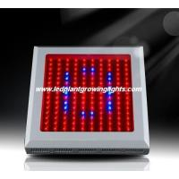 China High Power Red Orange 150w Led Plant Growing Lights 6500k For Horticulture Lighting on sale