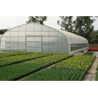 Agriculture Small Tunnel Greenhouse Anti Fog With Huge Roof / Side Ventilation Manufactures