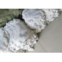 Dyed Fluffy Rex Rabbit Fur Skins Heavy Density 30*40cm With Customized Logo Manufactures