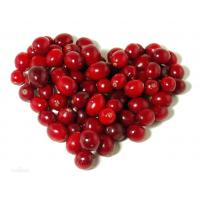 China high quality cranberry fruit powder sample free--Cranberry juice on sale