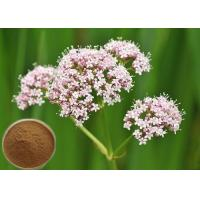 Natural Valerian Root Extract, 0.8% Valeric Acid for Antibacterial and antiviral CAS 8057-49-6 Manufactures