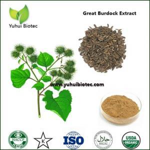 arctium lappa p.e,Burdock Seed Extract,burdock extract,burdock root extract Manufactures