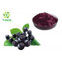 Natural Aronia Melanocarpa 25% 30% Anthocyanin Powder Aronia Chokeberry Extract Manufactures