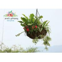 Semi-Circle Light Weight Hanging Planter Basket For Home & Garden Manufactures